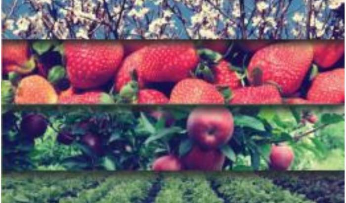 Convocatoria para productores horti-frutícolas
