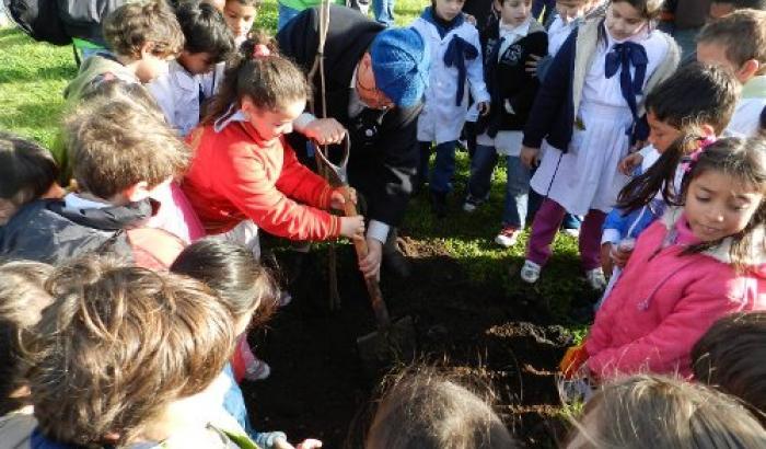 Plantación de árboles. Municipio F- Proyecto FUCAC